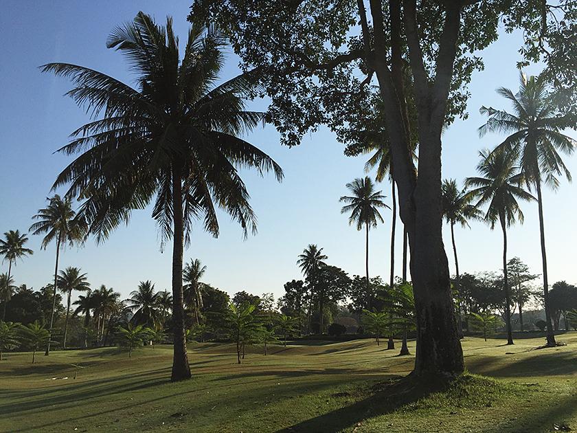 レムチャバンカントリークラブ ヤシの木いっぱい