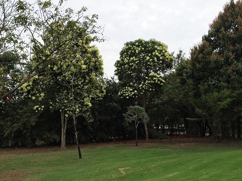 ロータスバレーゴルフリゾート 気になる木