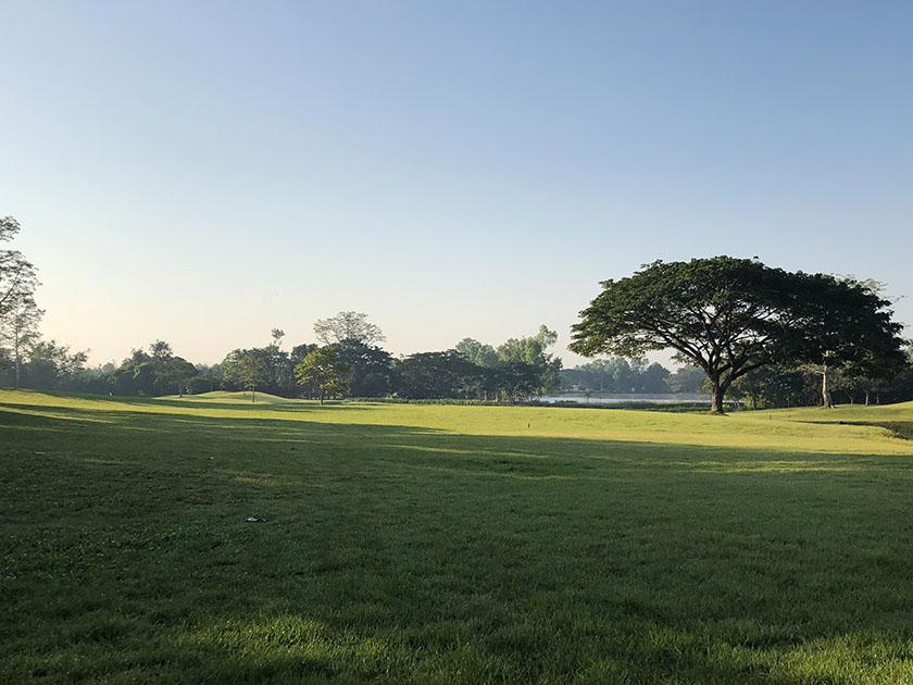 メージョーゴルフリゾート 大きな木