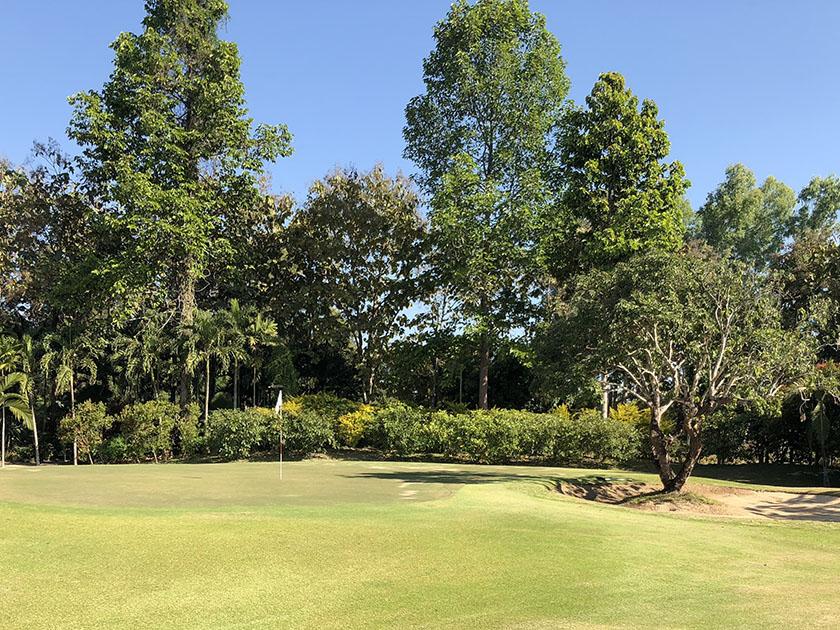 メージョーゴルフリゾート バンカーの中の木