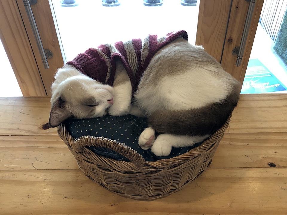 キャットフェインカフェ 寝る猫